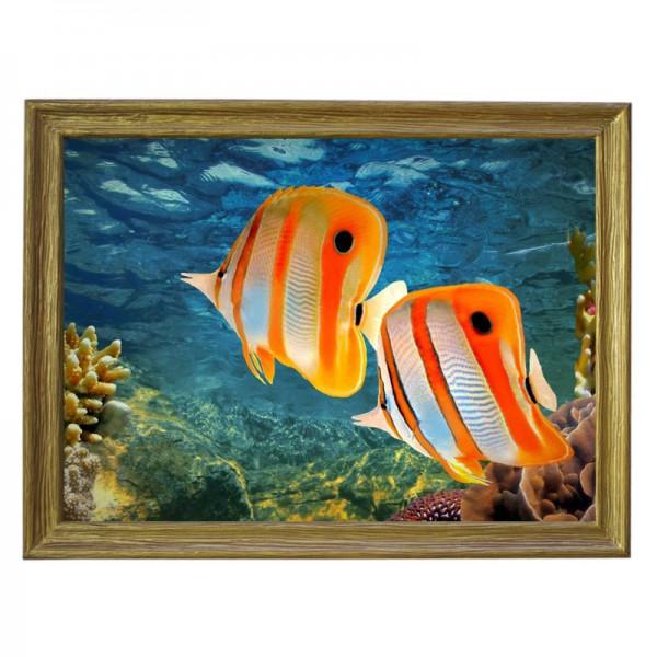 Картина обогреватель «Рыбки!» в рамке ПВХ 70X90 см. (0.5 кВт.)