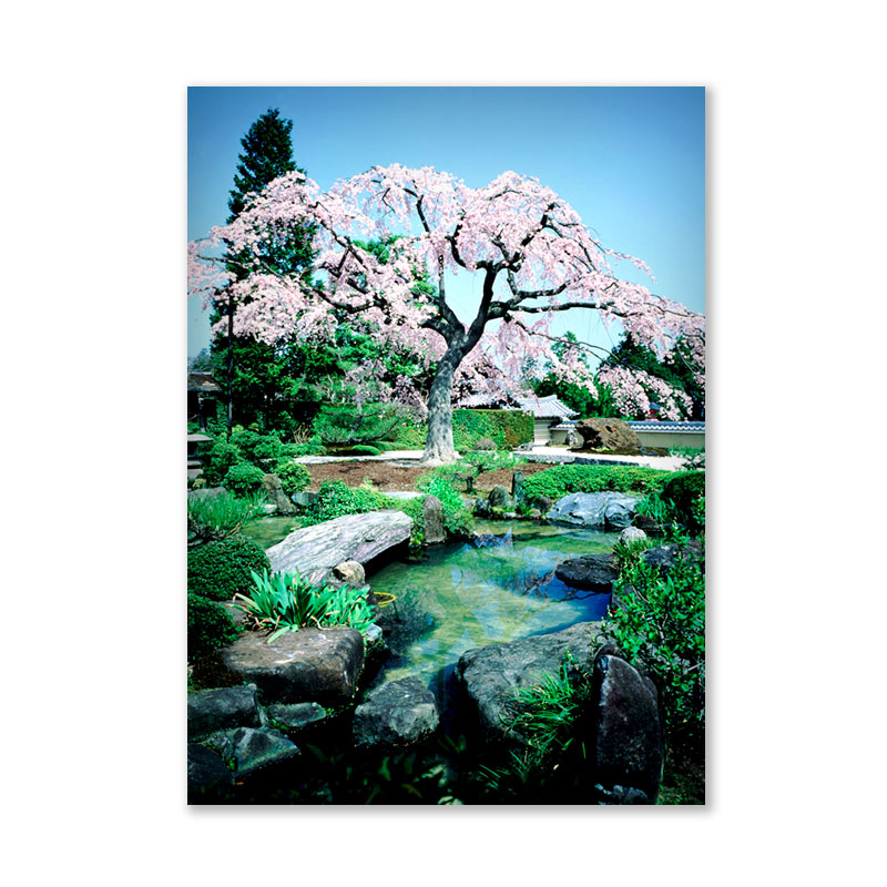 Картина обогреватель «Сакура» 60X80 см. (0.5 кВт.)