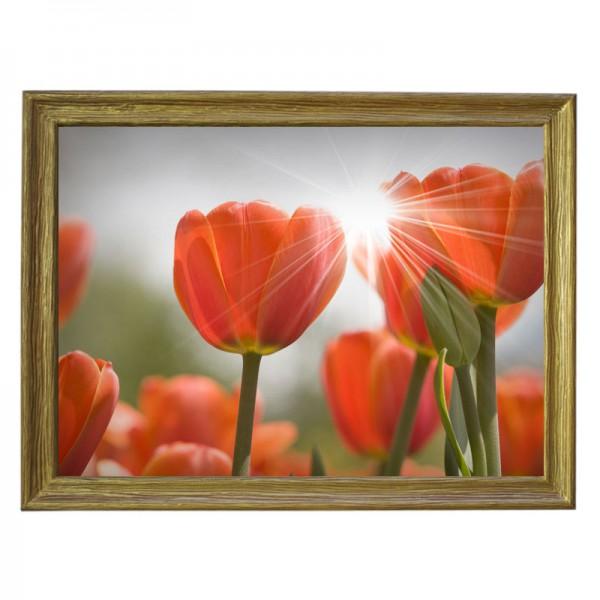 Картина обогреватель «Тюльпаны» в рамке ПВХ 70X90 см. (0.5 кВт.)