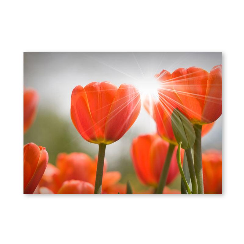 Картина обогреватель «Тюльпаны» 60X80 см. (0.5 кВт.)